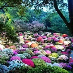 もうすぐゴールデンウィーク、ツツジの時期。 去年のツツジ。  #ツツジ #azalea #flower #flores #花 #春 #spring #primavera #武雄 #saga #takeo #佐賀 #ゴールデンウィーク #gw #御船山 #japan #mifuneyama #mifuneyamarakuen #御船山楽園 #今年は行けないかな #ゆーことしょーご #国登録記念物