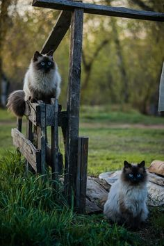 Cat Care - The Proper Ways to Make a Difference in Their Lives Cute Kittens, Cats And Kittens, I Love Cats, Crazy Cats, Funny Animals, Cute Animals, Cat Pose, Cat Photography, Fluffy Cat