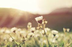 A felicidade está lá fora? Está. Mas se antes não vier de dentro, de nada  adianta. Os amigos, os amores e o sol na janela importam? Sim. Muito. A  felicidade sempre estará em cada um desses momentos. Mas antes de mais  nada, ela precisar existir dentro. Felicidade não pode ser imposta.  Comprada. Vestida. Ela não pode depender das roupas que visto ou das  mulheres e homens que beijo. Como um caminho alheio, ao qual estaríamos  sempre presos. A felicidade precisa vir das nossas vontades…