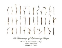 """"""" a taxonomy of interesting twigs"""" by Todd Lambrix"""
