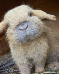 The Homer Simpson of bunnies? LOL