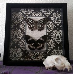 Ornate Dark and Beautiful Butterfly Taxidermy Wall by RevenantArts