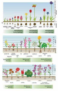 Bulb depth for flowering plants