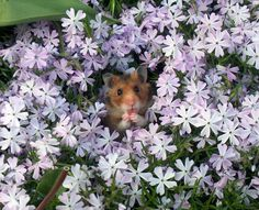 Hamster in Flowers Funny Animal Pictures, Cute Pictures, Funny Animals, Cute Animals, Animal Pics, Small Animals, Wild Animals, Funny Pics, Baby Animals