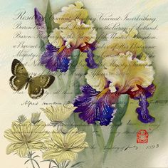 Iris Garden - Purple and creme iris with butterfly and creme flowers on writing.