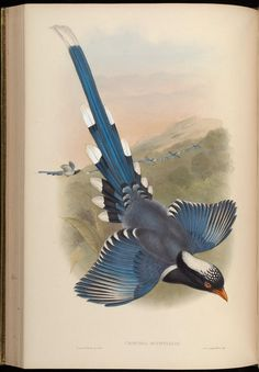 v 5 - Birds of Asia / by John Gould. - Biodiversity Heritage Library
