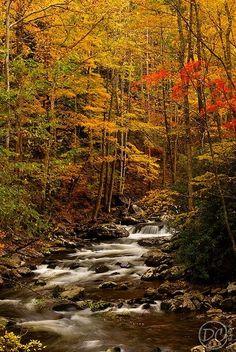 O riacho canta entre as árvores no outono.  Fotografia: kmvia.