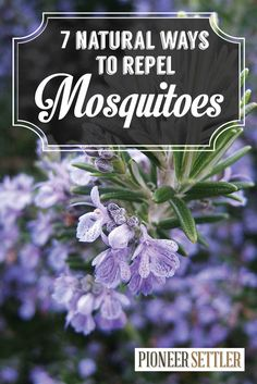 7 Homemade Natural Mosquito Repellents by Pioneer Settler at http://pioneersettler.com/natural-mosquito-repellent-plants