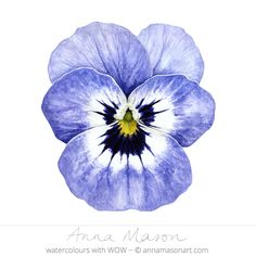 Viola © 2013 ~ annamasonart.com ~ watercolour 17 cm x 18 cm