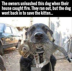 cool dog saves kitten from fire
