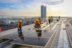 Staff have begun putting in photo voltaic panels on the roof of Petco Park, house of the San Diego Padres. (Photograph from Sullivan Solar Power)    The San Diego Padres introduced the set up of Main League Baseball's largest solar energy system.Sullivan Solar Power, a based by a San Diego na...