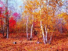Россия.Осень....