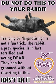 Trancing, tonic immobility, hypnotising....all the same thing. Please DONT DO IT! Scientific research shows that this puts a rabbit into a state of stress which increases the heart rate and cortisol levels (along with changing other vital signs too). Never do this to your bunny.