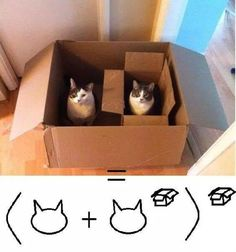 Learn Cat Math