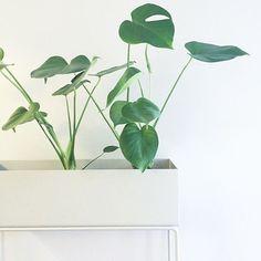 ferm LIVING Plant box light grey: http://www.fermliving.com/webshop/shop/green-living/plant-box-grey.aspx