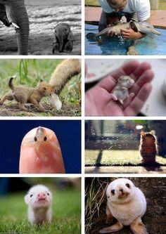 Baby animals are the best. It's almost impossible to be in a bad or sad mood after looking at these cuties.
