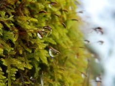 Selinas Ekologiska Meze. Magical Raindrops