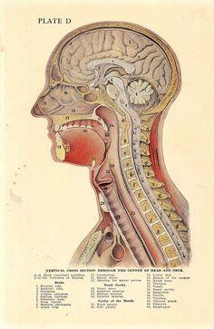 A Comparison of the benefits & methods of action for Pramiracetam versus Aniracetam http://bestnootropic.org/aniracetam-vs-pramiracetam/ #neurocore