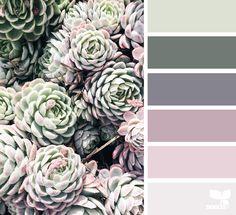 Succulent Hues - http://www.design-seeds.com/succulents/succulent-hues-10