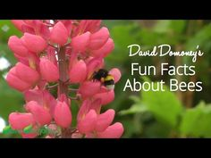 David Domoney's Fun Facts About Bees: How Old Are Honey Bees? - YouTube