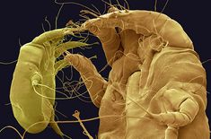Electron Microscopic scans of the insects among us | Motley News