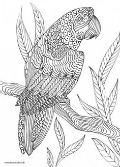 Bird printable adult coloring page