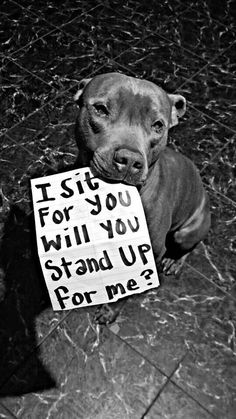 "Will you? ""Yes, and with respect, I stand up for you, my friend""  #DogLover #PitBull"