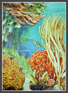 vintage sea life | Vintage sea life illustration, 1940's science text book-private ...
