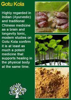 Richard Whelan ~ Medical Herbalist ~ Gotu Kola