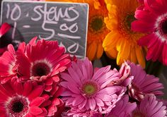 farmer's market daisies