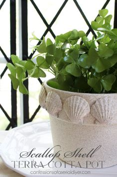 Scallop Shell Terra Cotta Pot    Give an old terra cotta pot an real upgrade, with sea shells from the beach and a fresh coat of paint. You can enjoy summer all year long!
