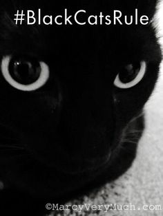 #blackcatsrule #blackcats Story at http://marcyverymuch.blogspot.com/2014/04/mostly-me-by-penelope-blackcatsrule.html