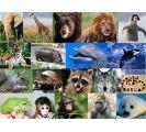 animales parte 1  (purpose game)