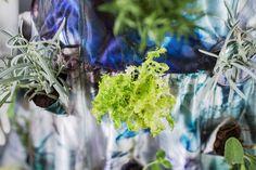 Be-IN, un Abito da Sposa coltivabile, by Matthan Gori.