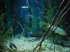 """Fundação Zoo-Botânica comemora """"Dia Mundial da Migração de Peixes"""""""