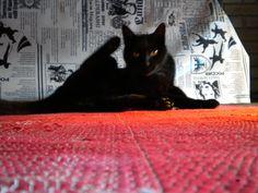cats  ❥  inspiração   by Papoula Brasil