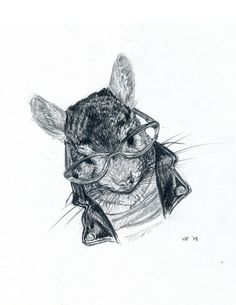 Hipster Chinchilla is one Fashionable Animal!