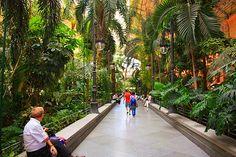 #Madrid: a beautiful botanical garden inside the station!  http://www.tuttogreen.it/la-stazione-madrilena-di-atocha-ora-e-unenorme-serra/  #Atocha
