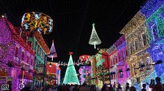 Osborne Lights, Such an amazing thing to see saw it a couple years ago!