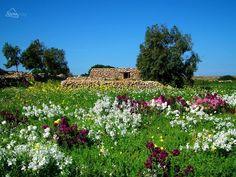 The Mellieha countryside