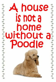 Poodle apricot Fridge magnet various designs by MagnetsAndHangers