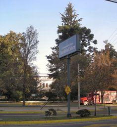Parque de la casa de la Cultura de Ñuñoa con Cedrus deodara y Araucaria bidwilli muy añosos