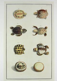 50 OFF  Baby Turtles  Ocean Marine Sea Life by OldTimersClub, $10.00  - Cute for future room too