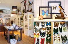 "www.demuseumwinkel.com    You can find unique gifts and interior items in the museum shop! We are called  ""The museum winkel"" for a reason. In our store and webshop you can look around as if you were in a museum, but everything is for sale.    The Museumwinkel.com has an unique assortment of butterflies, insects, stuffed animals, fossils, minerals, jewelry, skins and taxidermy supplies."