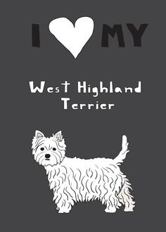 I love my west highland terrier