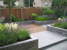 The gravel by the raised bed bit - A large oak deck has steps leading down to a lawn design based on two offset squares in this large town garden in Hove, Sussex. The exotic tropical planting is dominant even in mid-winter.