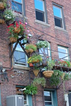 fire escape garden