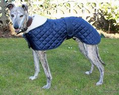 Quilted Greyhound Coat from