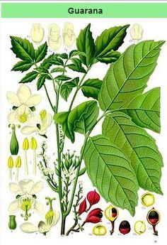 botanic slimming ecuador