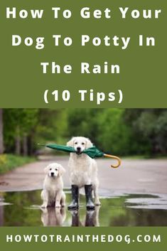 How To Get Your Dog To Potty In The Rain 10 Tips Dogtraining Puppytraining In 2020 Dogs Pets Cats Puppy Training